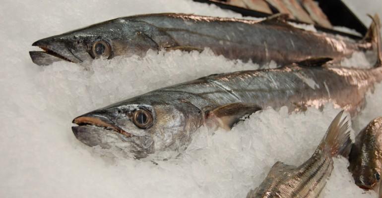ryby-w-lodzie